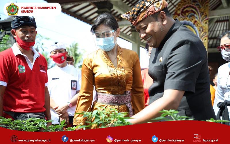 Bupati Mahayastra Didampingi Ketua TP.PKK Kunjungi Urban Farming di Banjar Tengah Desa Bedulu Gianyar