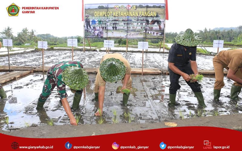 Pangdam IX/Udayana Bersama Bupati Gianyar tanam Padi Demplot Ketahanan Pangan di Subak Gelulung Desa Sidan Gianyar