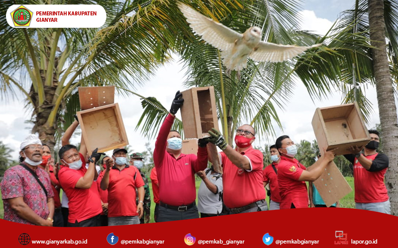 Kendalikan Hama Tikus, Mahayastra Lepas 8 Tito Alba